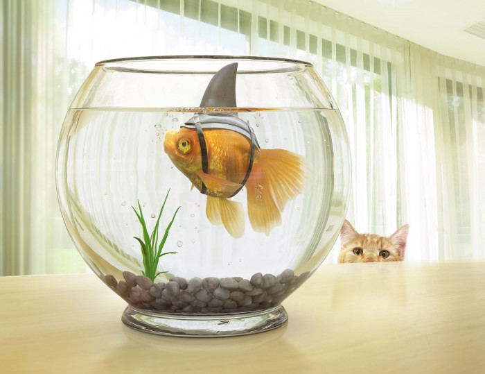 Fish_Bowl_Retouch_v003_crop_web