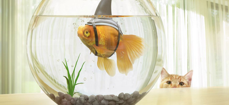 Fish_Bowl_Retouch_v003_crop_web