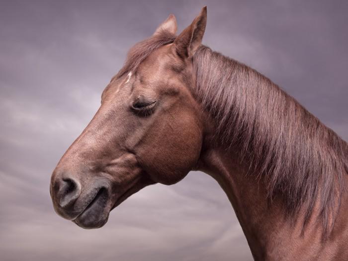 Horse Smile © 2017 Zack Seckler 00004