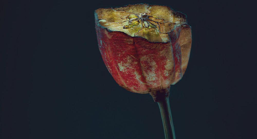 assaulted-flowers_simonpuschmann_01_KEY
